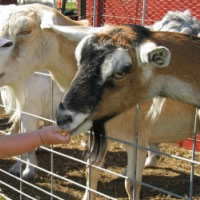 Santo Claus Petting zoo & Pony rides - Petting Zoos for Parties in Las Cruces, New Mexico