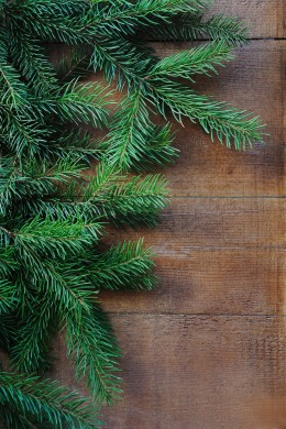 Image of Christmas tree branches.